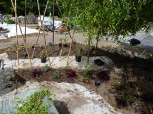 Mise en place des plantes dans le jardin