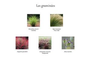 Palette végétale des graminées