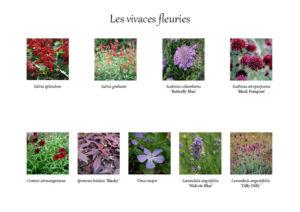 Palette végétale des vivaces fleuries