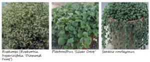 Végétaux mur végétal