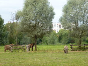 Les ânes du Parc Balzac - Chloé Froger, 2013