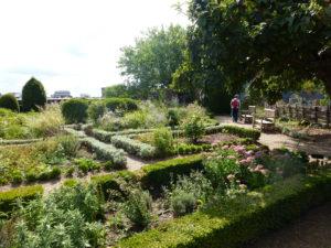 Le jardin médicinal du château - Chloé Froger, 2015