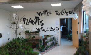 Photo du stand Plantes vertes tueuses ou vertueuses