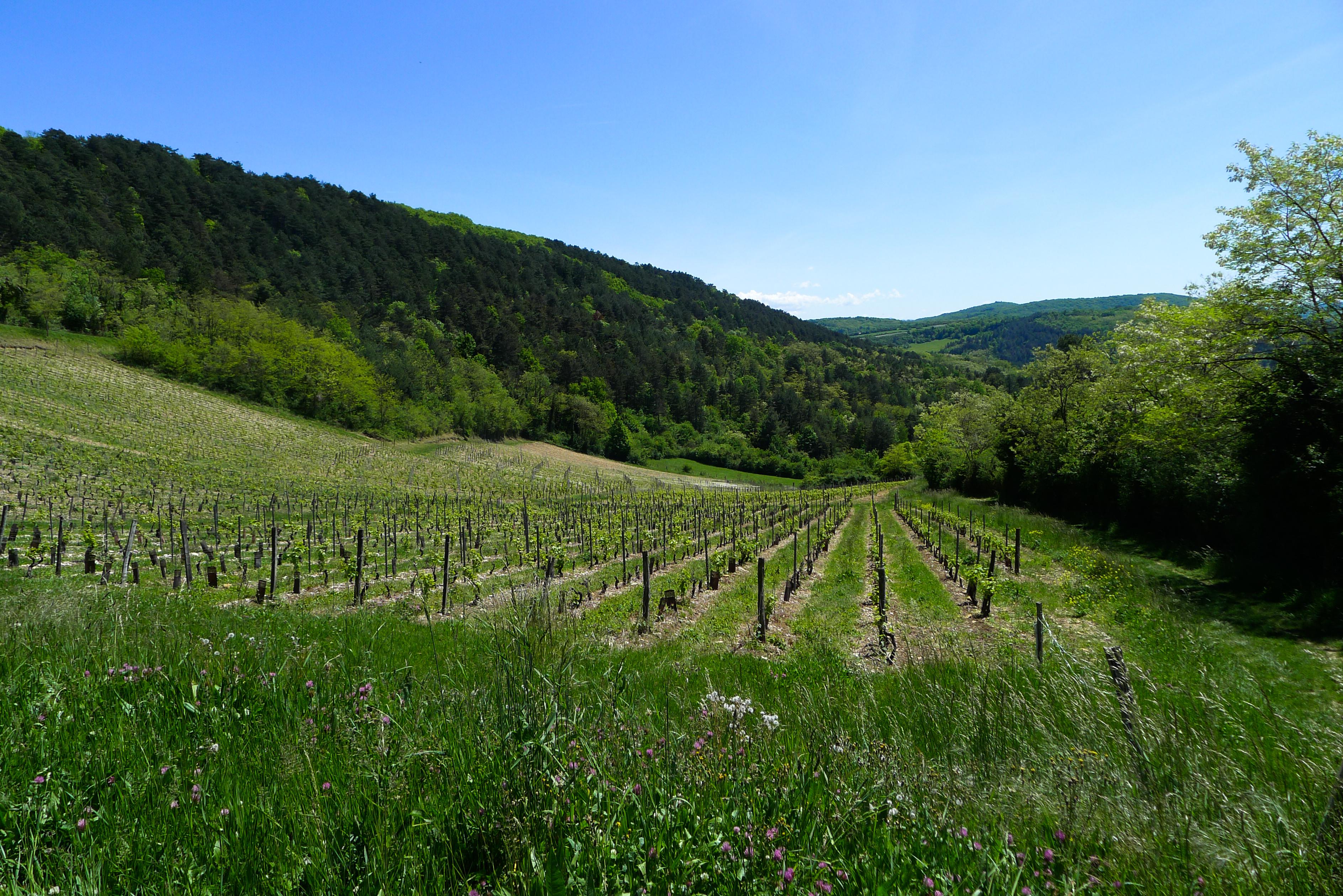 les vignes de cerdon  u00e0 mont july  u2013 chlo u00e9 froger  2017